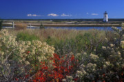 Marthas Vineyard Framed Prints - Edgartown Lighthouse Autumn Flowers Framed Print by John Burk