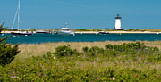 Beach Roses Prints - Edgartown Lighthouse Marthas Vineyard Massachusetts Print by Michelle Wiarda