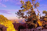 Grand Canyon Photo Originals - Edge of Canyon by Alan Lenk