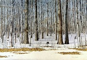 Egg Tempera Prints - Edge of the Forest Print by Conrad Mieschke
