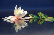 Amphibians Photography - Edible Frog Rana Esculenta Two Frogs by Wim Weenink