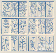 Ruse Posters - Edible Herbs Poster by Science Source