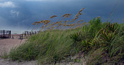Sea Oats Framed Prints - Edisto Oat Fields Framed Print by Skip Willits