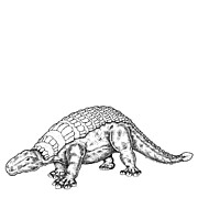 Cartoon Drawings - Edmontonia - Dinosaur by Karl Addison
