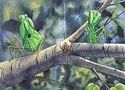 Mantis Prints - Eek Print by Catherine G McElroy