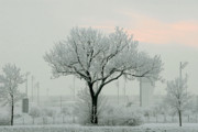 Freezing Photos - Eerie Days by Christine Till