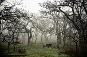 Bare Trees Prints - Eerie Fog Shrouded Park Print by Helene Cyr