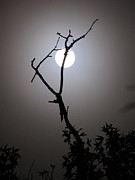 Shane Brumfield Prints - Eerie Moon Print by Shane Brumfield