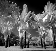 Filtered Light Prints - Eerie Palm Trees Print by Yali Shi