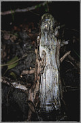Forest Floor Photo Framed Prints - Effigy Framed Print by Odd Jeppesen