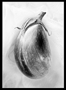 Eggplant Framed Prints - Eggplant and Border Framed Print by Marilyn Hunt