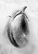 Eggplant Framed Prints - Eggplant Black and White Framed Print by Marilyn Hunt