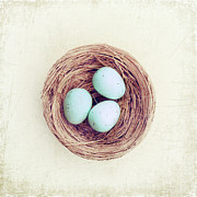 Textured Bird Posters - Eggs Bird Nest Poster by Carolyn Cochrane