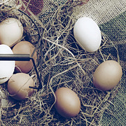 Basket Photos - Eggs by Joana Kruse