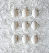 Number 3 Photos - Eggs On Feathers, Conceptual Image by Paul Biddle