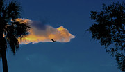 Backlit Prints - Egressing Egret Print by DigiArt Diaries by Vicky Browning