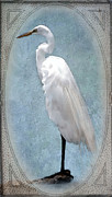 Breeding Digital Art Posters - Egret 2 in a Vintage Frame Poster by Betty LaRue