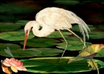 Dragon Fly Posters - Egret Fishing in Lily Pads Poster by Anne Beverley