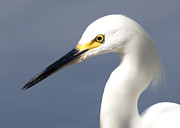 Yellow Art - Egret by Gary Michael Flanagan