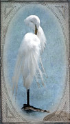 Egret Digital Art Posters - Egret In a Vintage Frame Poster by Betty LaRue