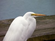 Egret On The Dock Print by Al Powell Photography USA