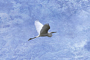 Egret Digital Art Posters - Egret Passing By Poster by J Larry Walker