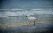 Panama City Beach Digital Art Posters - Egret Poster by Sandy Keeton