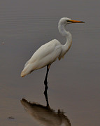 Birds Photos - Egret Standing in Pond - c3284d by Paul Lyndon Phillips