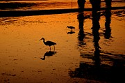 Silhouettes Prints - Egrets at Dusk Print by Dean Harte