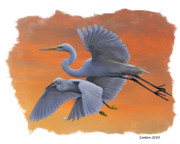 Great Egret Framed Prints - EGRETS GREAT and SNOWY Framed Print by Larry Linton