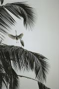 Palm Trees Fronds Prints - Egrets In A Palm Tree, Bali, Indonesia Print by Michael Nichols