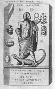 Dog Head Posters - Egyptian God Anubis, 17th Century Poster by Middle Temple Library