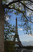 Framing Framed Prints - Eiffel Tower Tree Framed Print by Chris Rigamer