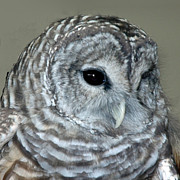 Snowy Night Metal Prints - Eight Hooter Metal Print by LeeAnn McLaneGoetz McLaneGoetzStudioLLCcom