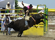 Bull Riding Prints - Eight Seconds Print by Bob Christopher