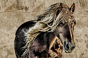 Cheval Posters - El Caballo Poster by Dancin Artworks