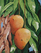Mangos Paintings - El Valle Mangos by Michael Earney
