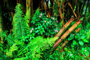 Verdant Prints - El Yunque National Forest Ferns Impatiens Bamboo Mirror Image Print by Thomas R Fletcher