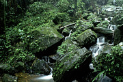 Puerto Rico Posters - El Yunque National Forest Rocks and Waterfall Poster by Thomas R Fletcher