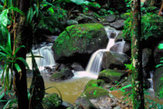 Lush Vegetation Posters - El Yunque National Forest Waterfall Poster by Thomas R Fletcher