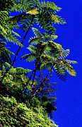 Tropical Rainforest Digital Art Prints - El Yunque Tree Ferns Print by Thomas R Fletcher