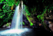 Verdant Prints - El Yunque Waterfall Print by Thomas R Fletcher