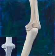 Bones Paintings - Elbow and Function by Sara Young