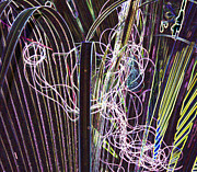 Saw Palmetto Photos - Electric Palmetto by Betty Carol Parker