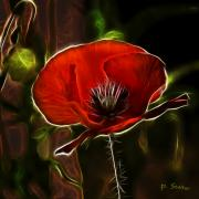 Edges Digital Art - Electric Poppy by Patricia Stalter