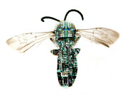 Hymenopteran Insect Art - Electronic Wasp by Neal Grundy