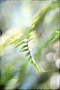 Photo Effects Prints - Elegant Fern Print by Darren Fisher