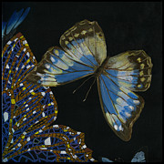 Yakubovich Prints - Elena Yakubovich - Butterfly 2x2 top right corner Print by Elena Yakubovich