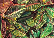 Foliage Paintings - Elenas Crotons by Marionette Taboniar