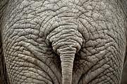 Elephant But Print by images by Luis Otavio Machado